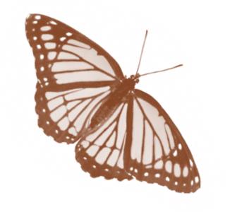 lfnebutterfly